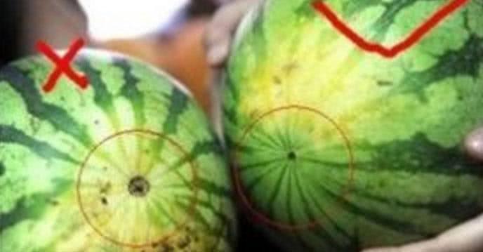 Cách chọn trái cây ngon của người đi buôn 13 năm ảnh 1