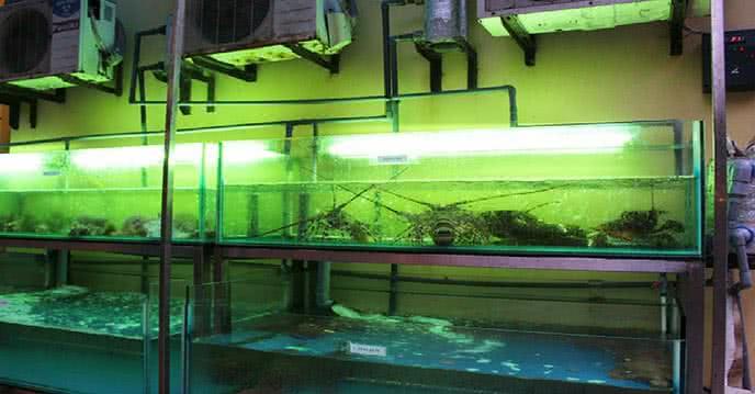 mẹo chọn hải sản tươi không bị nhiễm hóa chất 1