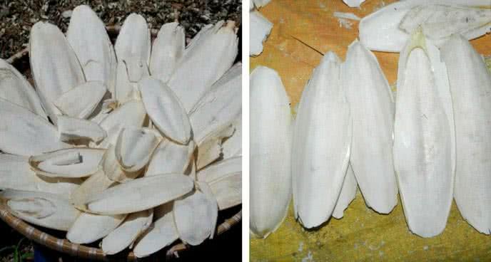 4 công dụng chữa bệnh từ những phần tưởng bỏ đi của hải sản 2