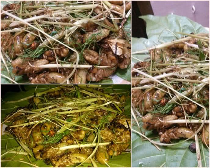 Top những món ăn kinh dị nhất thế giới ở Hà Nội ảnh 5