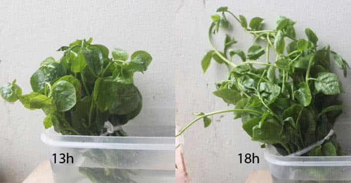 Cách phân biệt thực phẩm sạch và kém chất lượng ảnh 2
