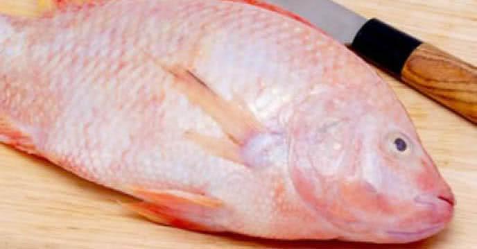 cá diêu hồng 1