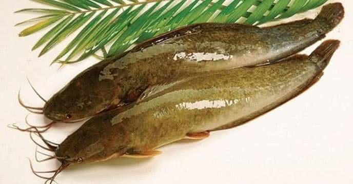 Bật mí cách làm cá trê nướng thơm lừng, cực ngon 1