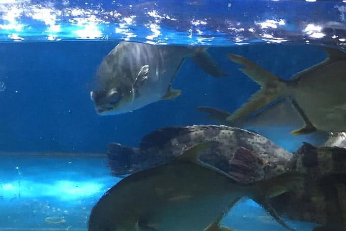 hải sản tươi sống vẫn bơi lội tung tăng trong bể - nhà hàng thế giới hải sản 18 dương đình nghệ