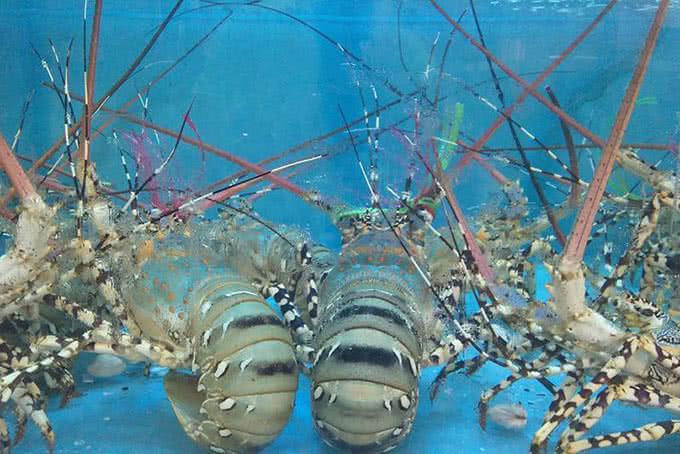Tôm hùm - thế giới hải sản dương đình nghệ
