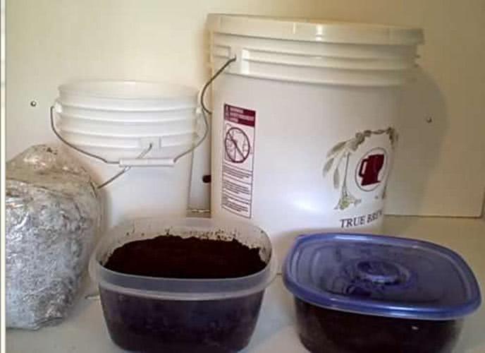 Bột cà phê để trồng nấm kim châm